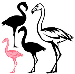 flamingo birds vector design set