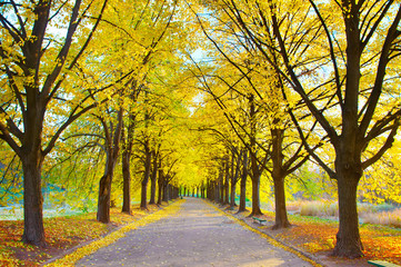 Beautiful autumn walkway