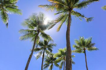 パラオのヤシの木と空 / ベラウの空