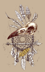 illustration  animal skull