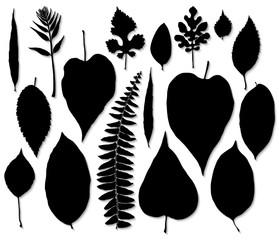 Vector set of black leaves silhouette