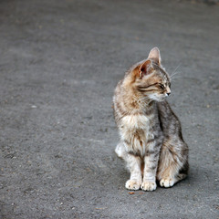 a lone grey tabby cat sitting on the pavement and squinting from