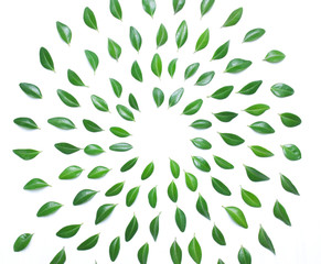 The spiral design of green leaves on a white background