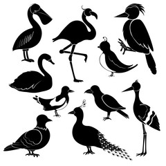 Silhouettes of different birds on white background.