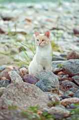 white cat stay in stones near the river on shore