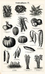 Vegetable crops 4 (from Meyers Lexikon, 1895, 7/288/289)