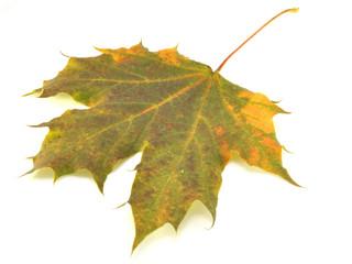 Картинки красота растений осенью