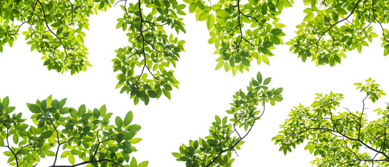 set of branch with leaves isolated on white background Fotoväggar