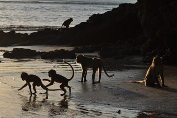 Nasty Monkeys