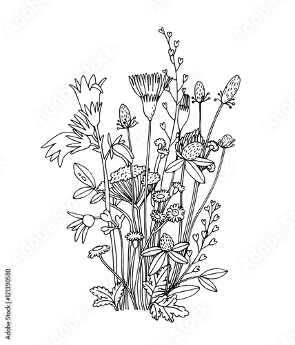 Sketch Of The Wildflowers On A White Background Stock