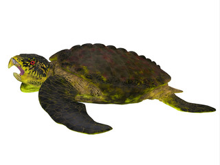 Archelon Turtle Side View - Archelon was a giant marine turtle that lived in South Dakota, USA in the Cretaceous Period.