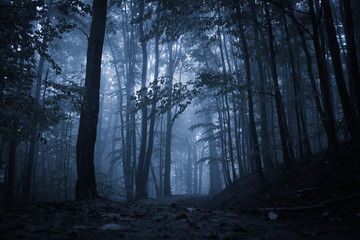 Spooky misty rainy forest, located in Transylvania, Romania, Halloween holiday celebration background concept