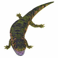 Dendrerpeton Amphibian on White - Dendrerpeton was an extinct genus of amphibious carnivore from the Carboniferous Period of Canada.