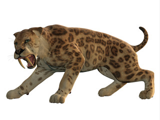 Saber-Tooth Cat Angry - Saber-Tooth Tiger was an extinct large carnivore that lived worldwide during the Eocene to Pleistocene Eras. Wall mural