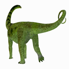 Puertasaurus Dinosaur Tail - Puertasaurus was a herbivorous sauropod dinosaur that lived in Patagonia in the Cretaceous Period.