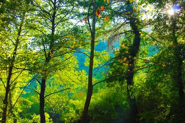 orman ve ağaçlar