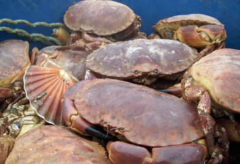 Live crabs and shellfish