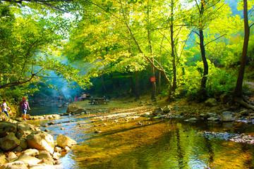 orman ve yansıma