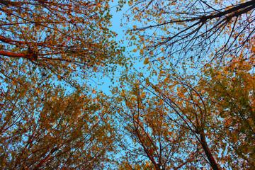 orman ve gökyüzü