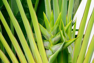 Heliconia leave with flower in a nature green forest