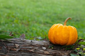 Single pumpkin on timber decay