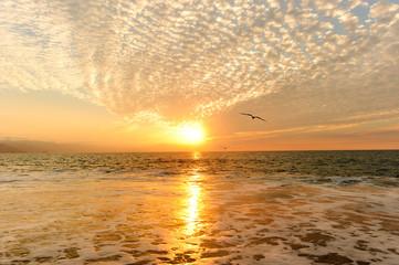 Sunset Ocean Birds