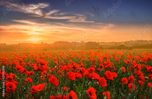 Wall mural Red poppy field