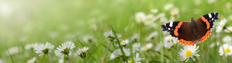 Blumen 695