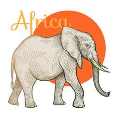 African animals elephant.