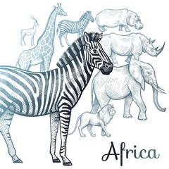 Illustration of African animals.