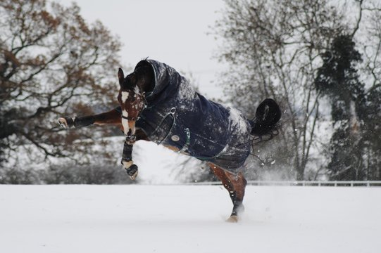 horse rearing in the snow