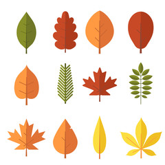 Autumn leaf flat design set. Green, red and orange fallen autumn leaves collection. Maple, spruce, oak, rowan, birch and more vector leaves isolated on white background.