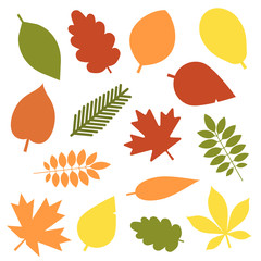 Autumn leaves flat design set. Green, red and orange fallen autumn leaf set. Maple, spruce, oak, rowan, birch and more tree leaves collection isolated on white background.