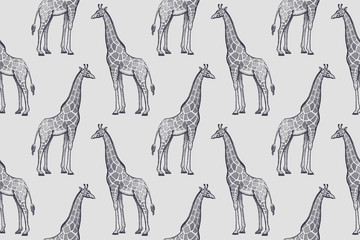 Seamless pattern with African giraffes.