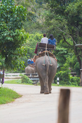 traveler ride elephant on the road