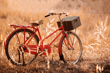 beautiful landscape image with Bicycle at summer grass field.cla