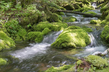 moss covered stones in a brook in the Mount Carleton, the highest elevation in New Brunswick, also the highest peak in the Canadian Maritime Provinces