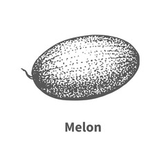 Vector illustration hand-drawn melon