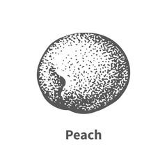 Vector illustration hand-drawn peach