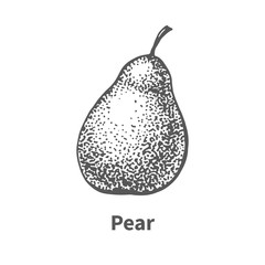 Vector illustration hand-drawn pear
