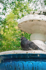 Dove sitting on fountain