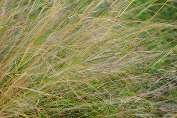 Movement of weeds in the wind