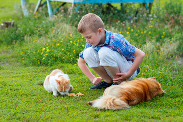 smiling little boy in a plaid shirt feeds homeless cat and redhead stray dog in the yard, dog lies, cat - eats