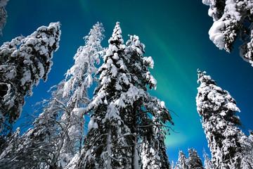 Nordlichter Aurora Borealis in finnischer Arktis