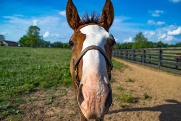 Baby Horse Nose