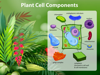 Plant cell components diagram