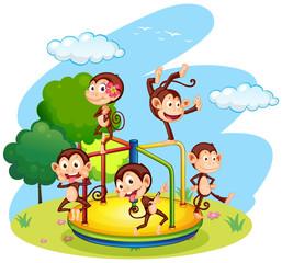 Five monkeys playing on roundabout