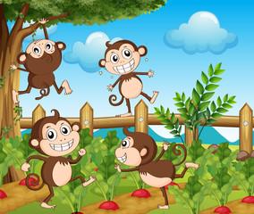 Four monkeys in the vegetable garden