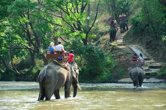 Elephant trekking through jungle
