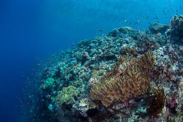 Coral Reef Drop Off